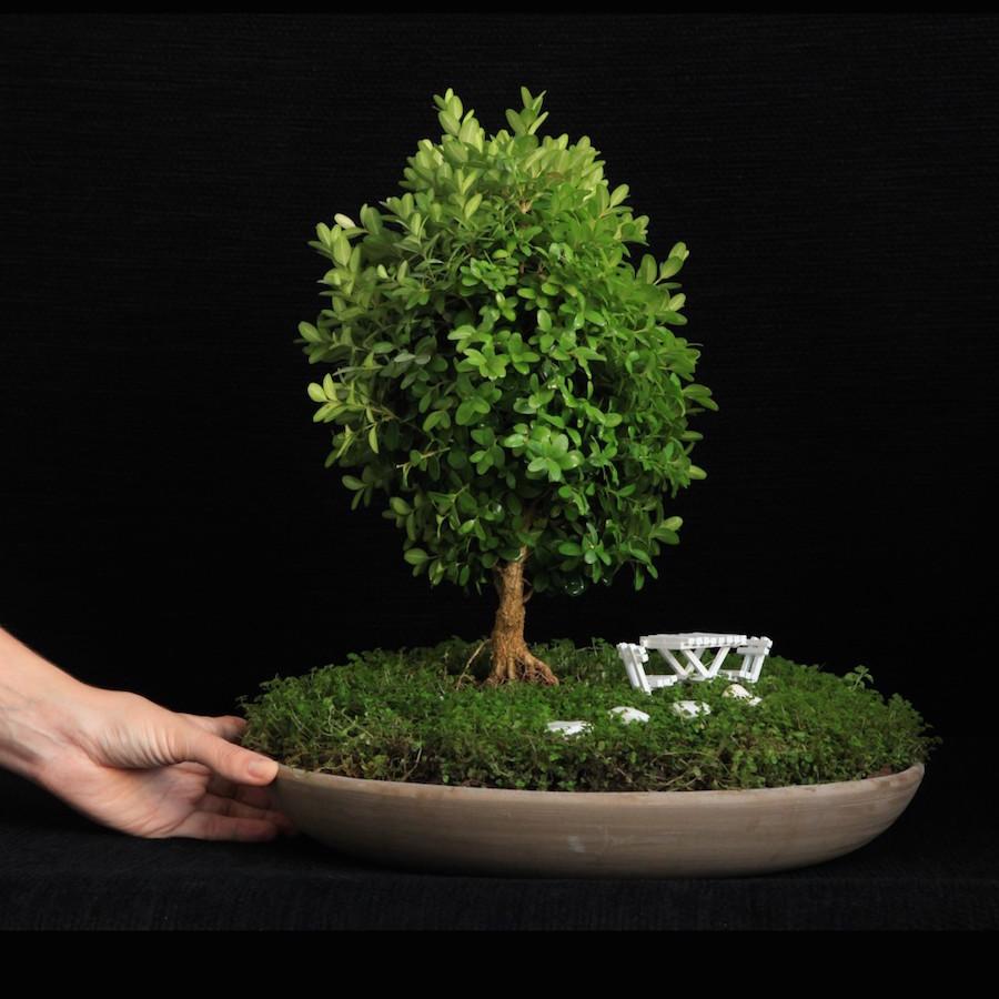 jardins de bonsai em miniatura bonsai empire. Black Bedroom Furniture Sets. Home Design Ideas
