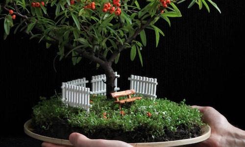Jardins de Bonsai em Miniatura