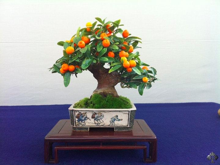 Resultado de imagem para imagens de bonsai frutíferas