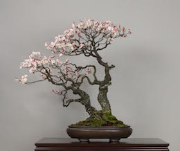 Omoi-no-mama, Omiya Bonsai Art Museum.