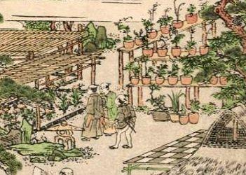 Exposição japonesa de bonsai de Harunobu