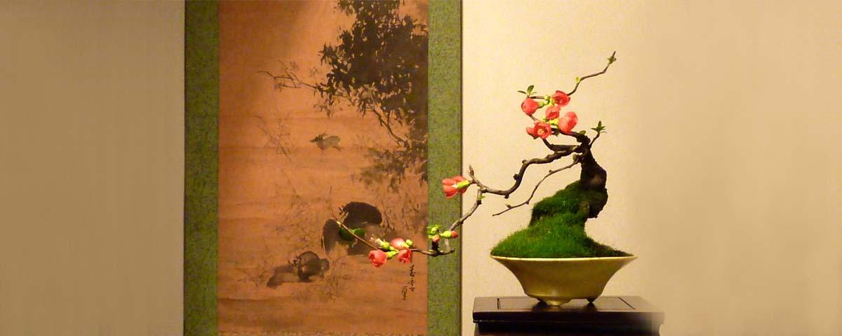 Floração bonsai