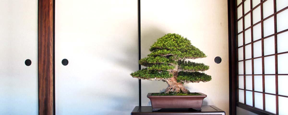 Exibição tokonoma clássico
