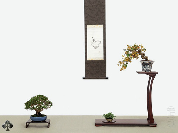 Expositor de Bonsai Mame