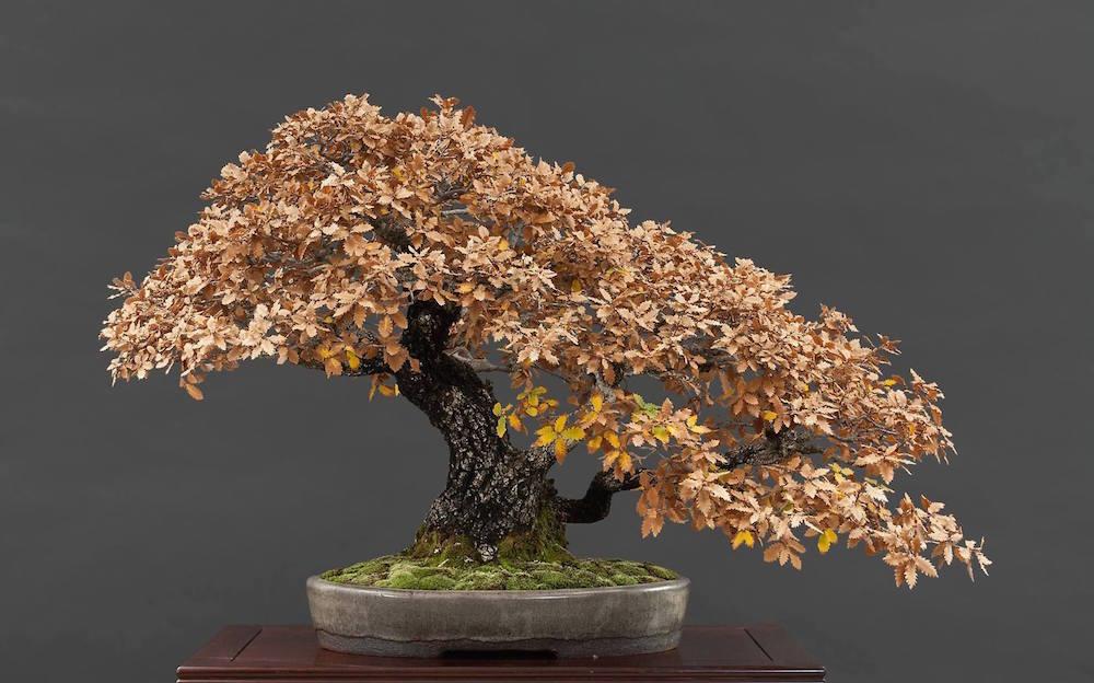 Silhueta Do Inverno Bonsai Empire