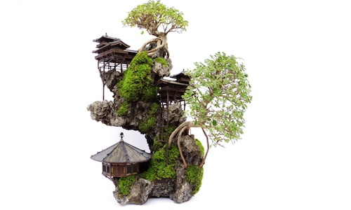 Bonsai de Penhasco