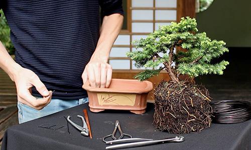 Como fazer uma árvore de Bonsai