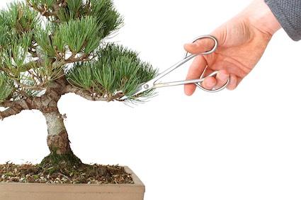 Pinçando um bonsai de forma errada 5a187d32f23